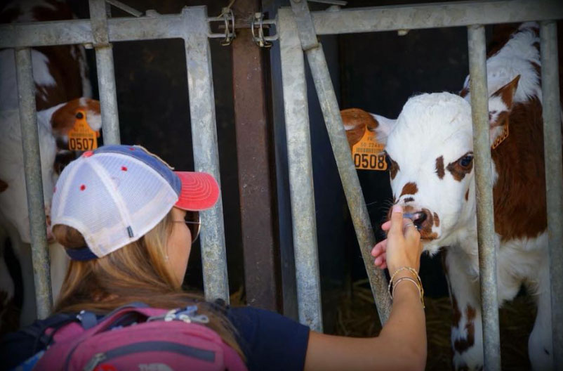 Petting a cow in France